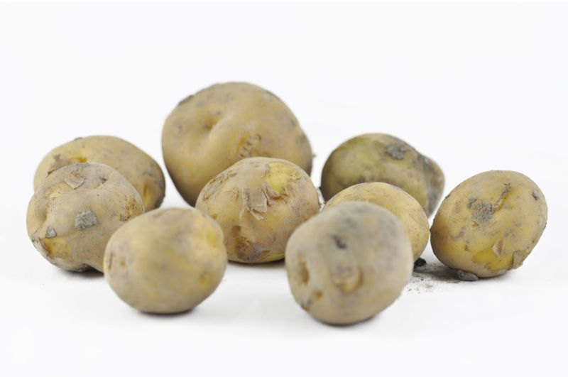 Aardappels (Bintjes)