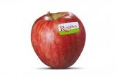 Appels (Rubens)