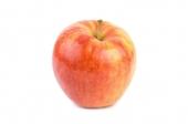 Appels (Cox orange)