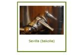 Olijfolie Sevilla